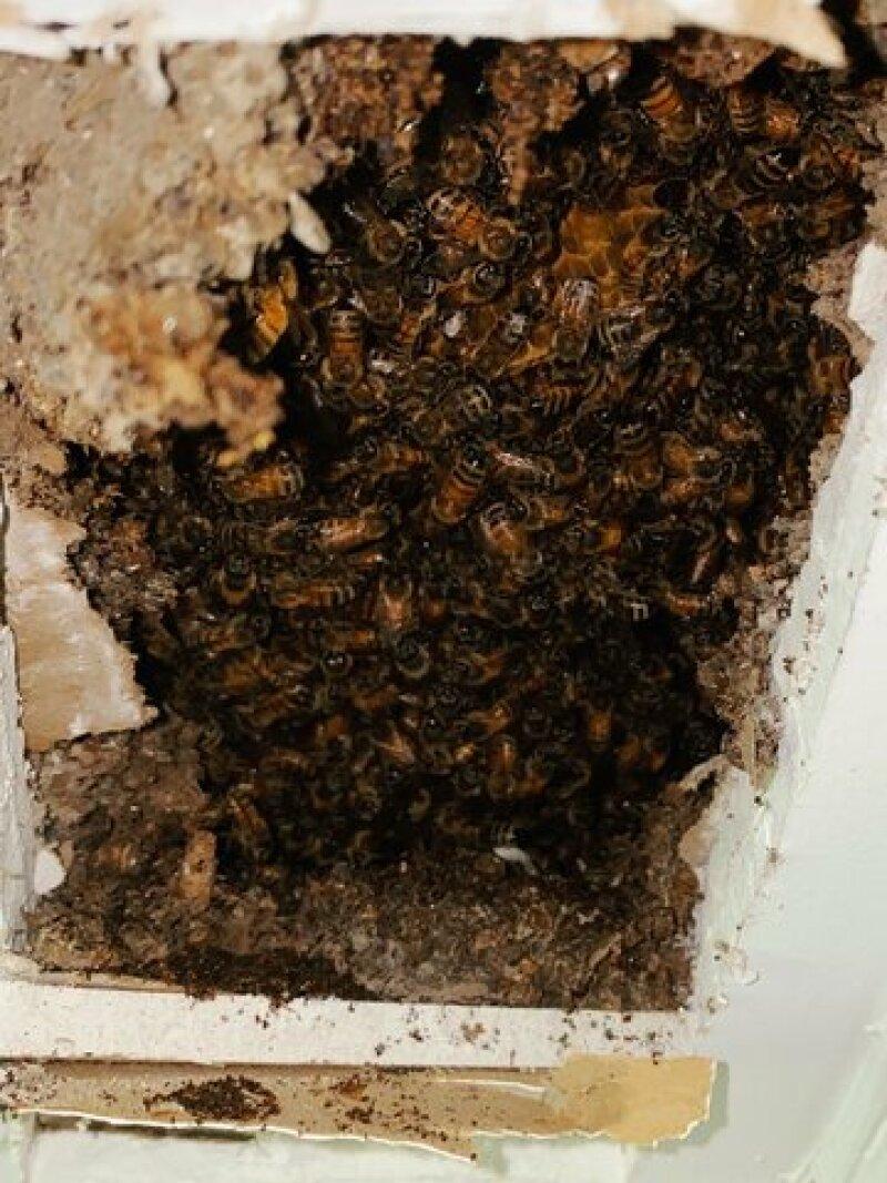 Beehive 4