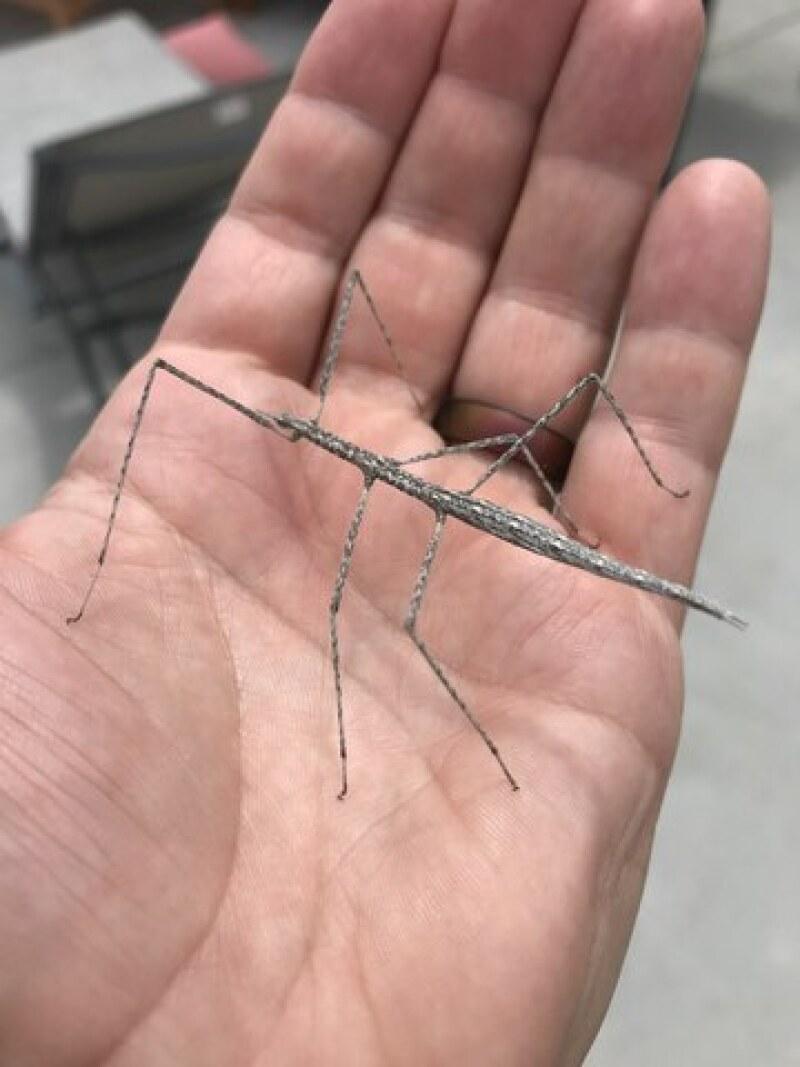 A walking stick bug, one of Spencer's favorites.
