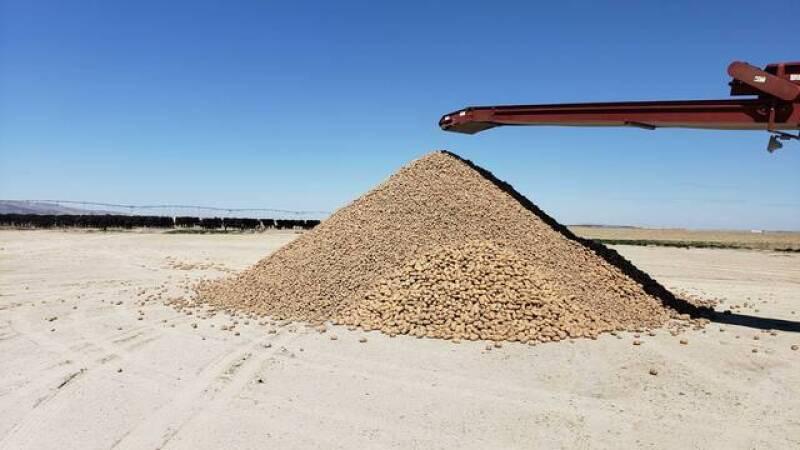 Ryan's pile of potatoes