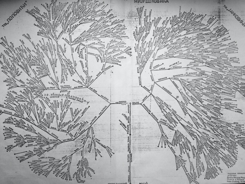 The Mijušković family tree that Ilija had been doing research on for 47 years: