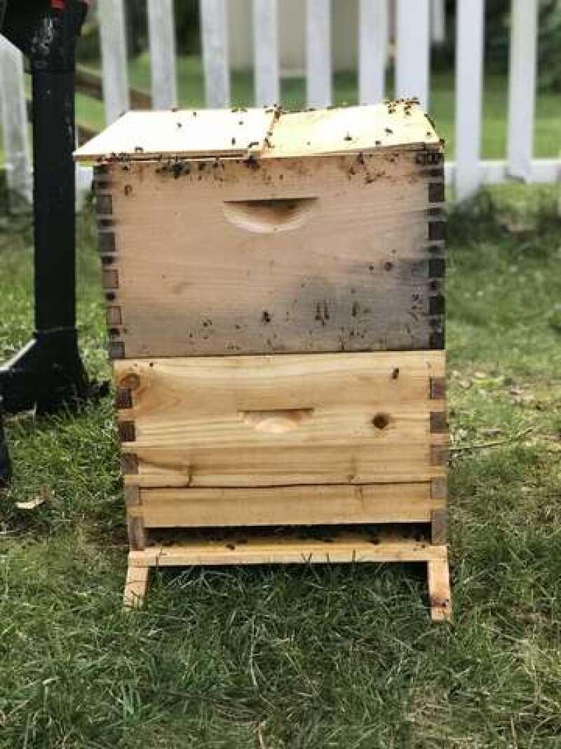 Bee box.