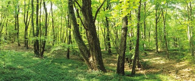7 Wonders of the Mormon World: Sacred Grove